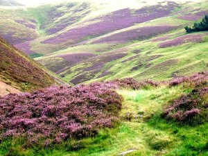 heather valley shorty autumn