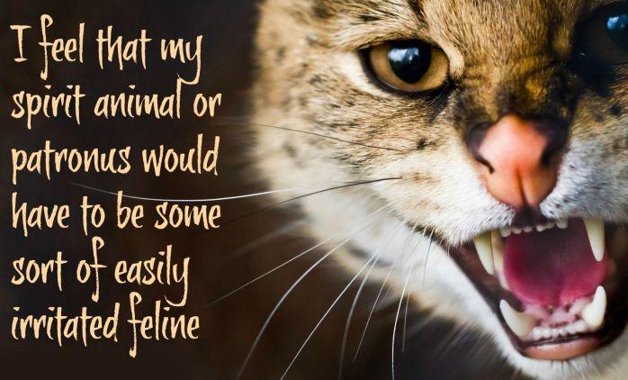 irritated feline
